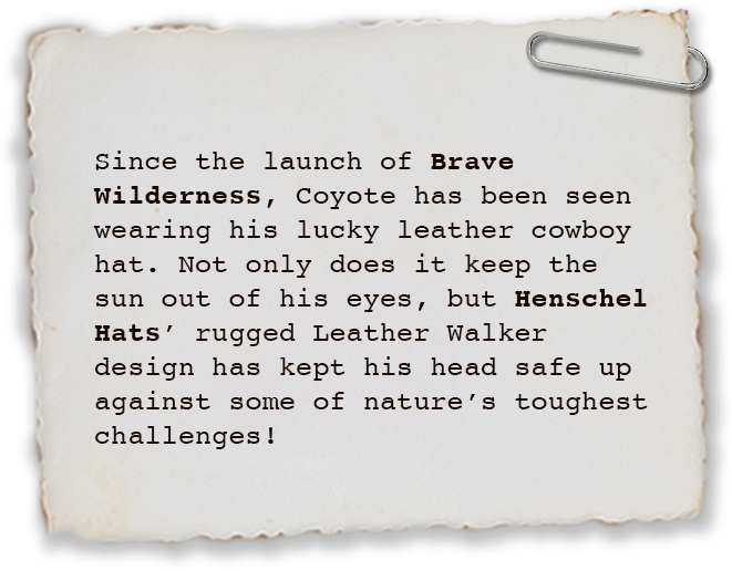 Since the launch of Brave Wilderness, Coyote has been seen wearing his lucky leather cowboy hat. Not only does it keep the sun out of his eyes, but Henschel Hats' rugged Leather Walker design has kept his head safe up against some of nature's toughest challenges!