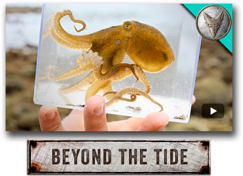Brave Wilderness: Beyond The Tide with Coyote Peterson.