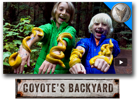 Brave Wilderness, Coyote's Backyard with Coyote Peterson.