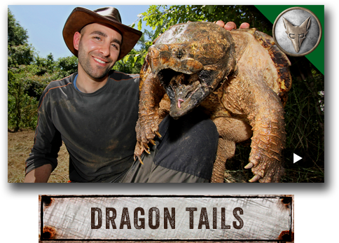 Dragon Tails with Coyote Peterson.