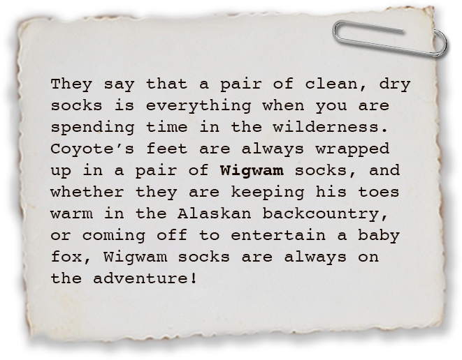They say that a pair of clean, dry socks is everything when you are spending time in the wilderness. Coyote's feet are always wrapped up in a pair of Wigwam socks, and whether they are keeping his toes warm in the Alaskan backcountry, or they are coming off to entertain a baby ocelot in the jungles of Costa Rica, Wigwam socks are always on the adventure!