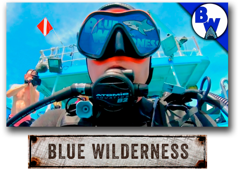 Brave Wilderness: Blue Wilderness