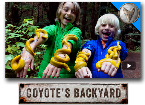 Brave Wilderness: Coyote's Backyard with Coyote Peterson.