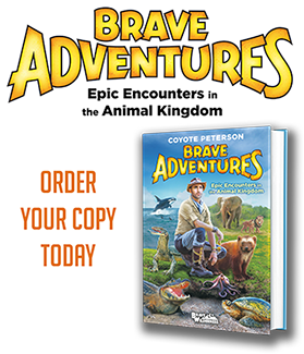 Brave Wilderness Epic Encounters in The Animal Kingdom. Coyote Peterson.